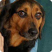 Adopt A Pet :: Theodore - Baileyton, AL