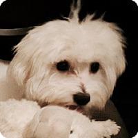 Adopt A Pet :: Teddy - Miami, FL