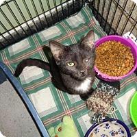 Adopt A Pet :: Timothy - Breinigsville, PA