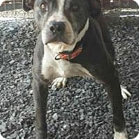 Adopt A Pet :: Tank - Franklin, WV