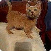 Adopt A Pet :: RANCHER - Hampton, VA