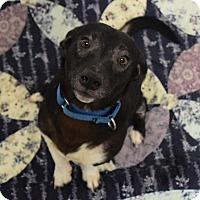 Adopt A Pet :: Michael - Lisbon, OH