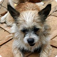 Adopt A Pet :: McElroy - Rowayton, CT