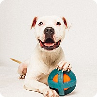 Adopt A Pet :: Toys McGee - Houston, TX