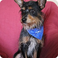 Adopt A Pet :: Barley - Campbell, CA
