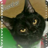 Adopt A Pet :: Baxter - Shippenville, PA