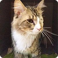 Adopt A Pet :: Dimitri - Sarasota, FL