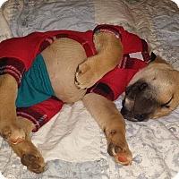 Adopt A Pet :: Buddy - Milton, GA
