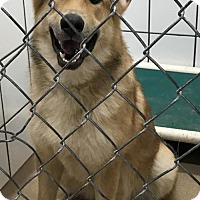 Adopt A Pet :: 49242 Max Adoption Fee $200 plus OH tag - Zanesville, OH