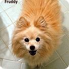 Adopt A Pet :: Fruddy