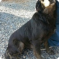 Adopt A Pet :: Molly - Orange Cove, CA