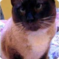 Adopt A Pet :: Mitra - Davis, CA