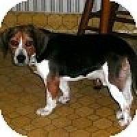 Adopt A Pet :: Rambler - Novi, MI