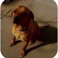 Adopt A Pet :: Kujo - Glenpool, OK