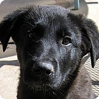 Adopt A Pet :: Baby Lightning - Oakley, CA