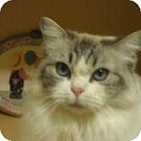 Adopt A Pet :: Maggie - Ennis, TX