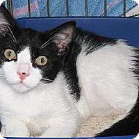 Adopt A Pet :: Tux - Riverhead, NY