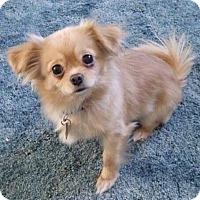 Adopt A Pet :: Sparkle - Gainesville, FL
