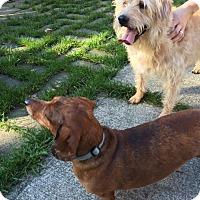 Adopt A Pet :: Oscar & Annabelle - Bellingham, WA