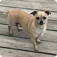 Adopt A Pet :: Bud - Essington, PA