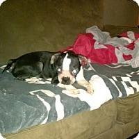 Adopt A Pet :: Harley Lynn - Columbus, OH
