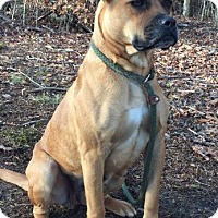Adopt A Pet :: Izzy - Hagerstown, MD