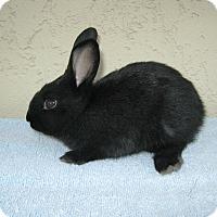 Adopt A Pet :: Alaska - Bonita, CA
