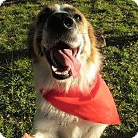 Adopt A Pet :: Jacko - San Diego, CA