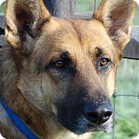 Adopt A Pet :: Gus - Vacaville, CA