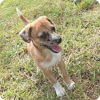 Adopt A Pet :: Georgia - Bozrah, CT