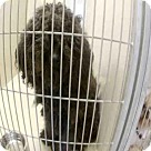 Adopt A Pet :: MIDNIGHT