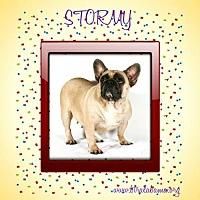Adopt A Pet :: Stormy - Alabaster, AL