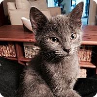 Adopt A Pet :: Izzy - Richmond, VA