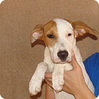 Adopt A Pet :: Zepher - Oviedo, FL