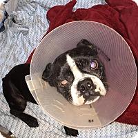 Adopt A Pet :: Antonio - Weatherford, TX