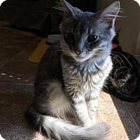 Adopt A Pet :: Otis - Pleasant Hill, CA
