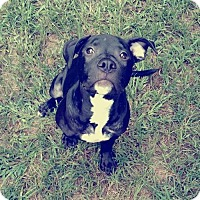 Adopt A Pet :: Clint Black - Warner Robins, GA