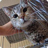 Adopt A Pet :: Truly - Colorado Springs, CO