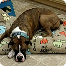 Adopt A Pet :: Snuggles *courtesy post*