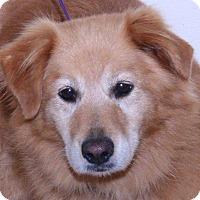 Adopt A Pet :: Lyra - McDonough, GA