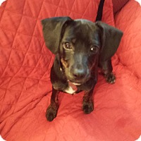 Adopt A Pet :: Lady - Canton, OH
