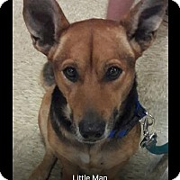 Adopt A Pet :: Little man - Pompano Beach, FL