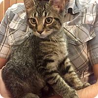 Adopt A Pet :: LeoCP - Carlisle, PA