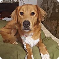 Adopt A Pet :: Huggy - Austin, TX