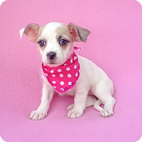 Adopt A Pet :: Farina - Burbank, CA