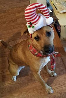 Shepherd (Unknown Type) Mix Dog for adoption in Rockaway, New Jersey - Shelby (SADIE)