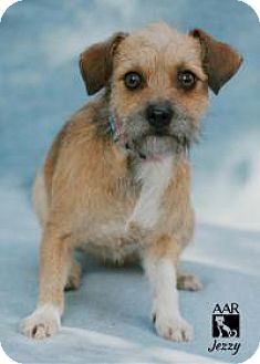 Terrier (Unknown Type, Small) Mix Dog for adoption in Tomball, Texas - Jezzy