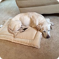 Adopt A Pet :: Clarice - Indianapolis, IN