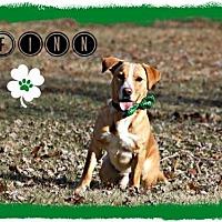 Adopt A Pet :: Finn - Marion, KY