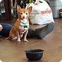 Adopt A Pet :: Star - Aurora, IL